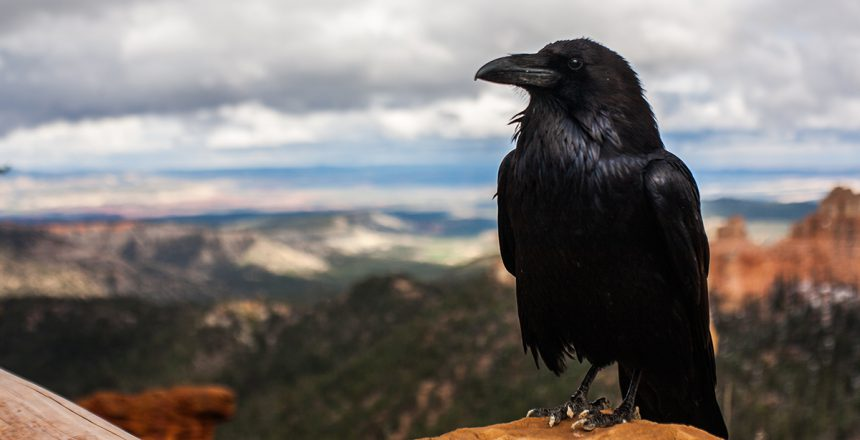 raven1200